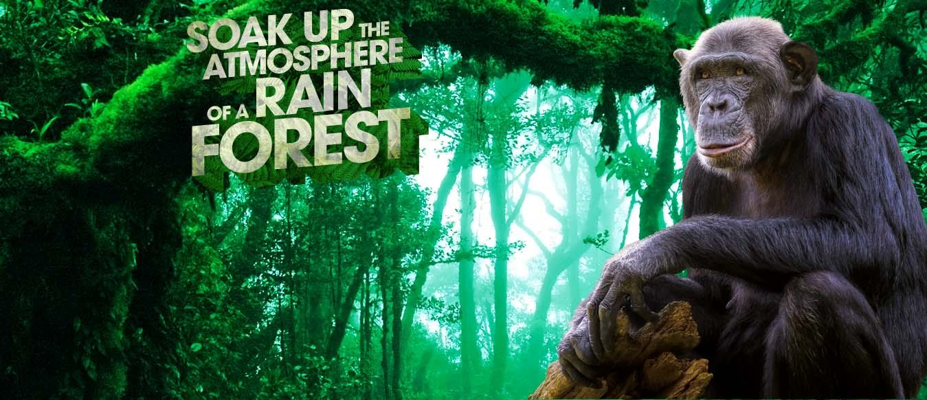 Banner Rainforest.jpg
